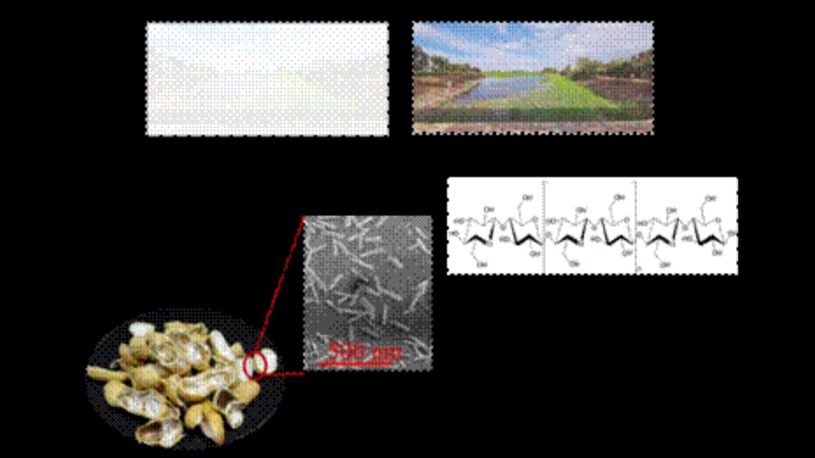 Indian scientists develop energy efficient smart screens from groundnut shells