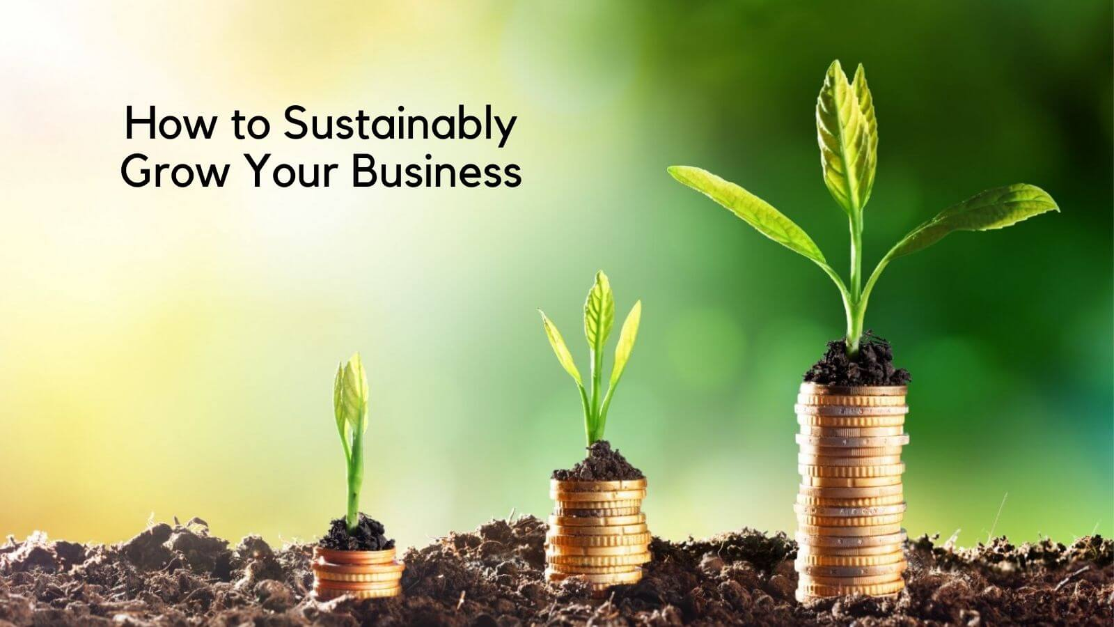 How to Grow Your Organic Business In India: Learn from Leaders