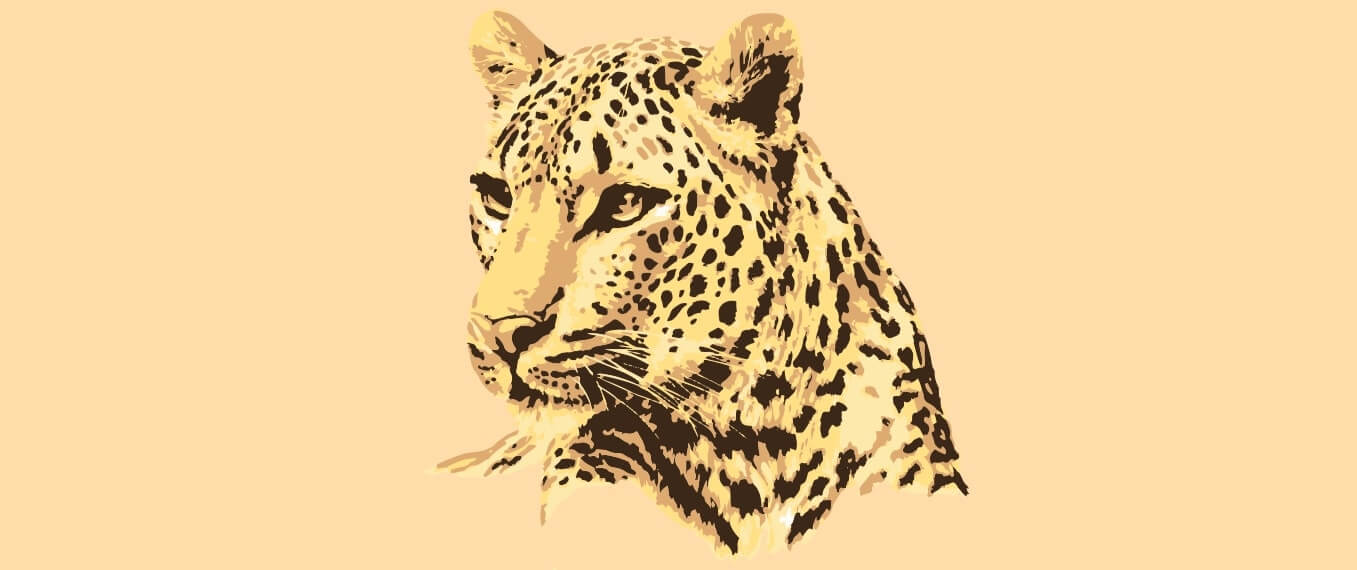60% Rise in Numbers of Leopards in India | Status Report 2018