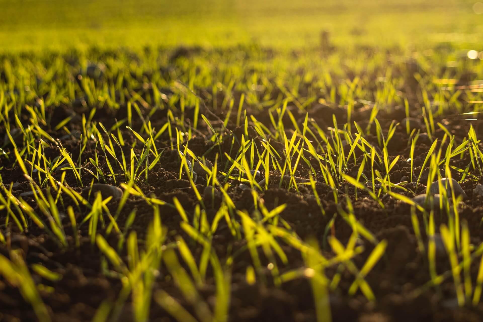 What is Organic Farming ?