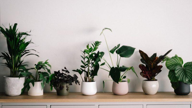 planters for indoor plants annie spratt unsplash