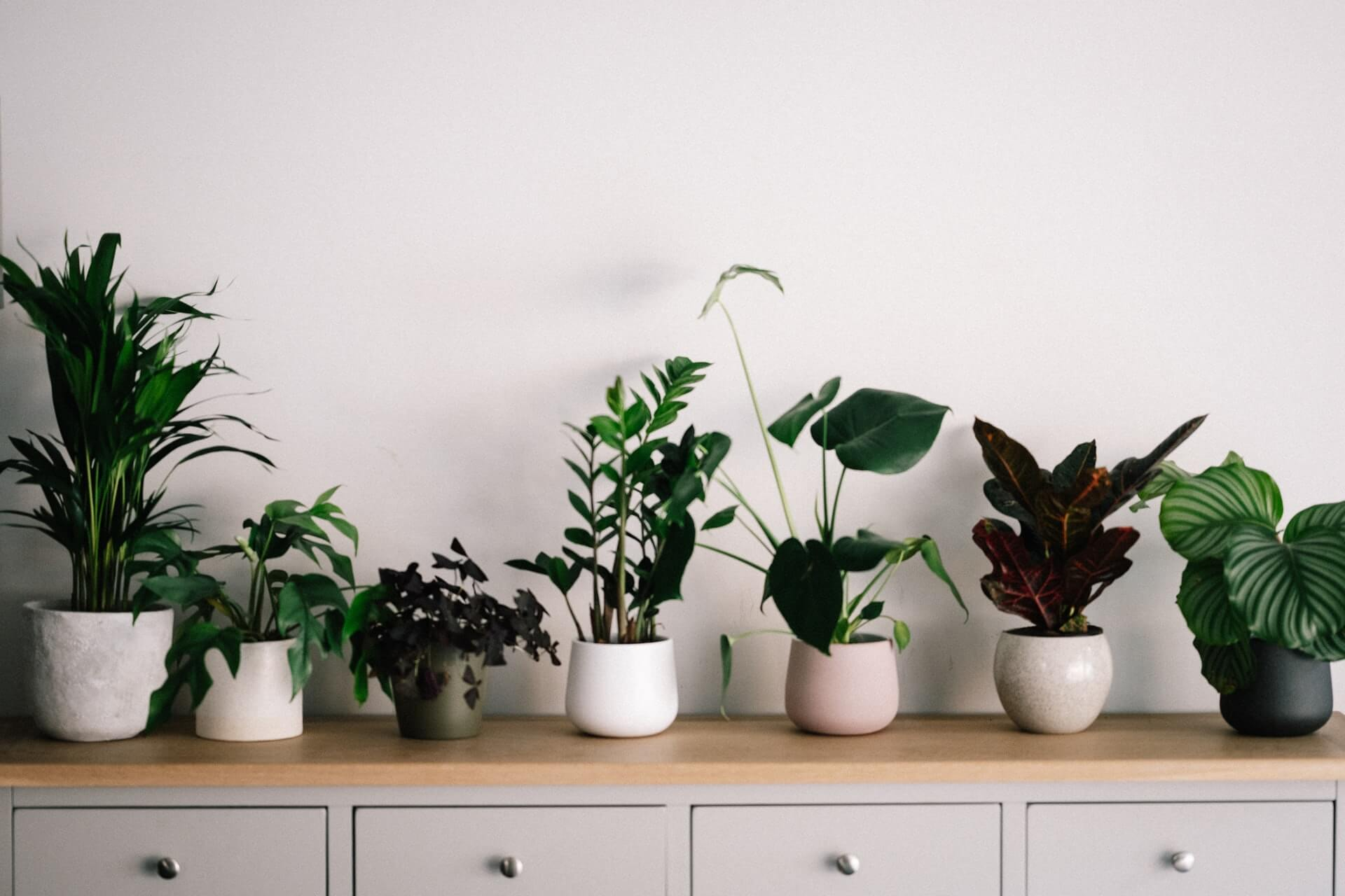 The 5 Best Planters for Indoor Plants