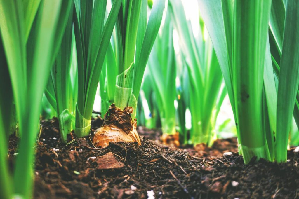 What are Biofertilizers ?