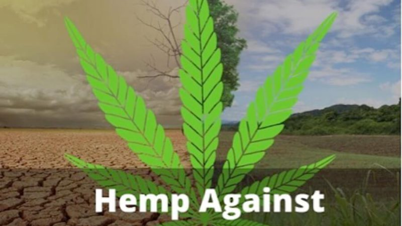 Featured Image Hemp can help fight Global Warming