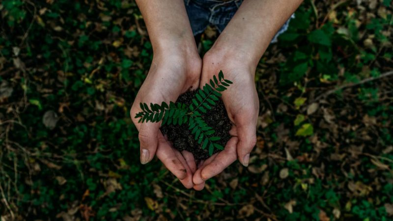 Common Myths of Green Living
