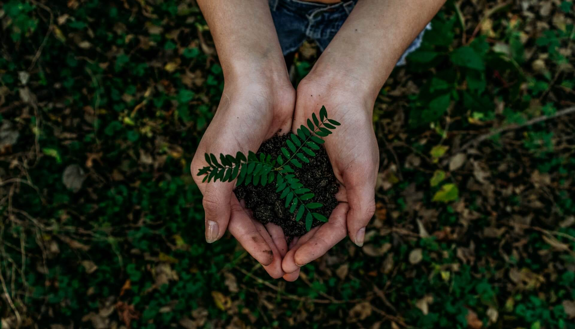Busting 3 Common Myths of Green Living