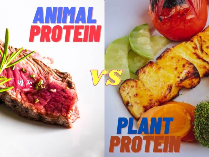 Animal Vs Plant Protein – Which one is better for your health
