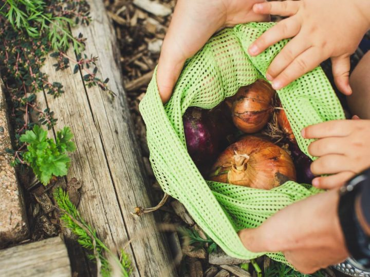 Best Eco Friendly Reusable Vegetable Storage Bags You Can Buy Online