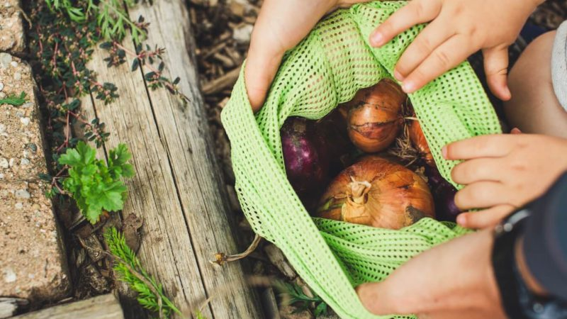 Featured Image Reusable Vegetable Storage Bags
