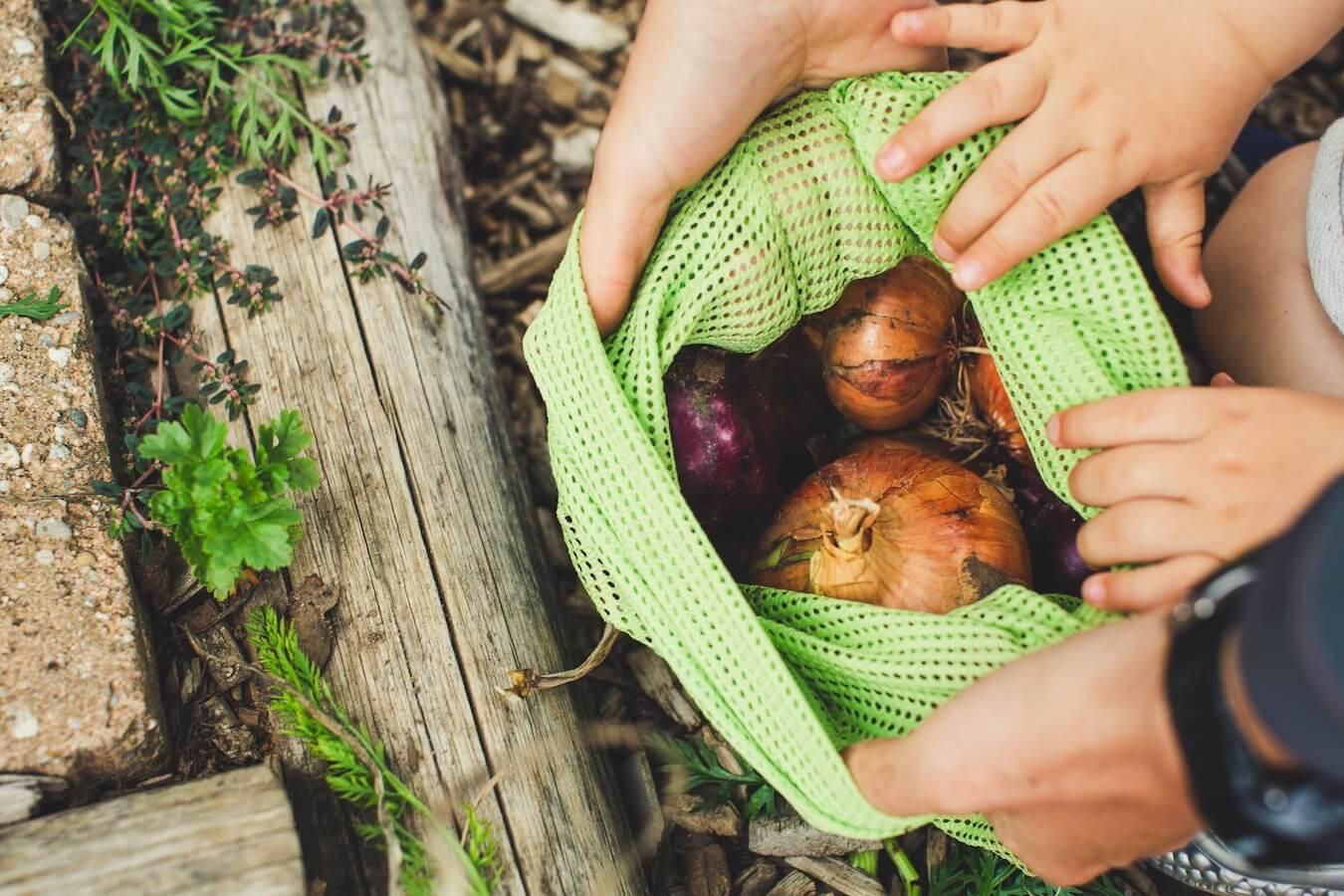 Best Eco Friendly Reusable Vegetable Storage Fridge Bags You Can Buy Online