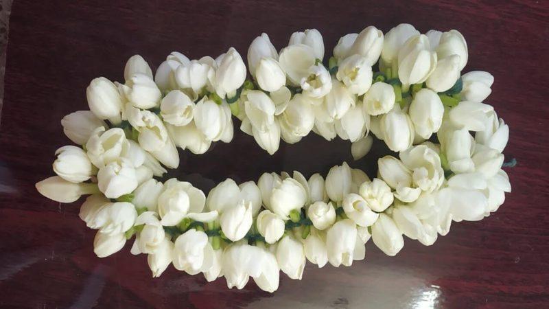 Madurai Malli - Jasmine Flowers