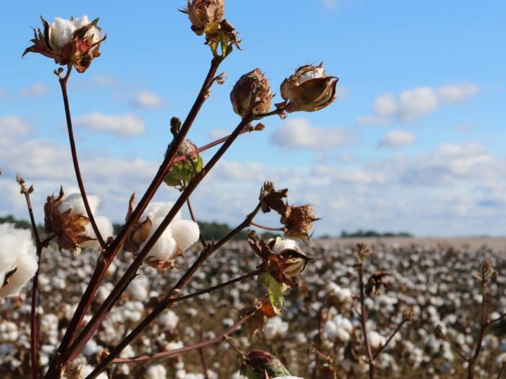 What is The Global Organic Textile Standard (GOTS) Certification all about?