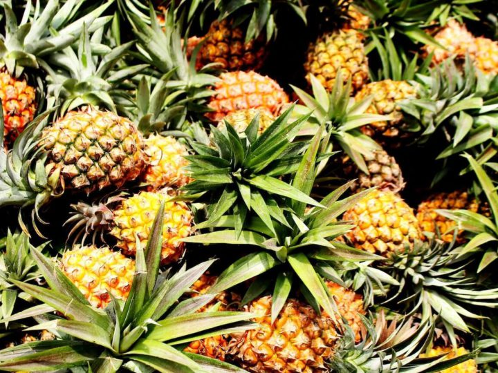 How Pineapple Agroforestry can be Sustainable Alternative to Jhum Cultivation