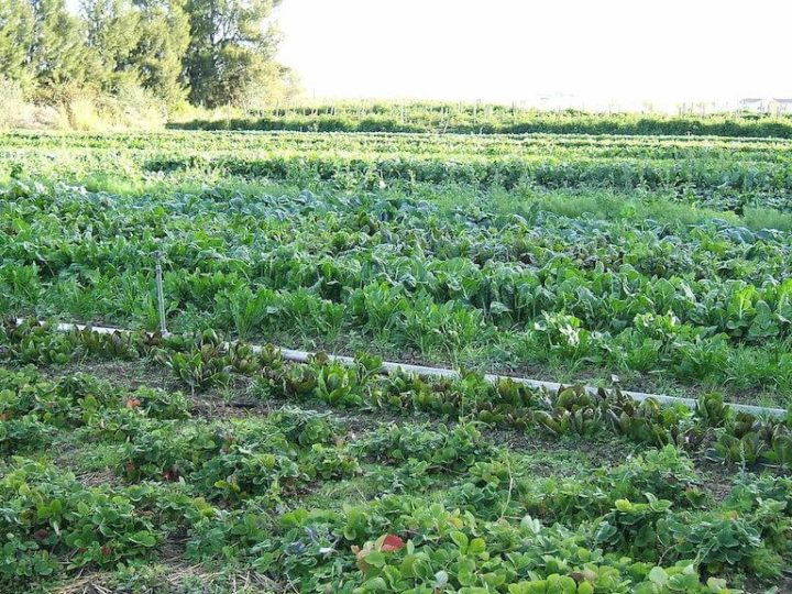 Dept. of Agriculture to develop Certified Organic Production Hubs