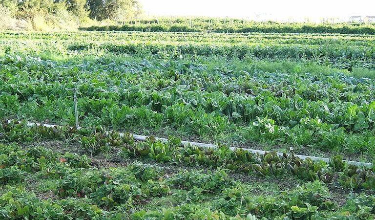 Area under organic farming increases in India