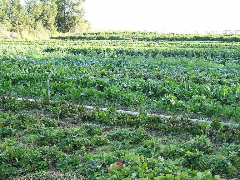 Area under organic farming increases in India