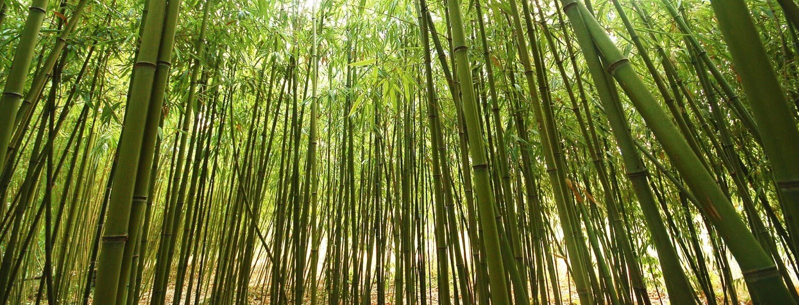 National Conference on Opportunities Challenges for Bamboo in India Organised