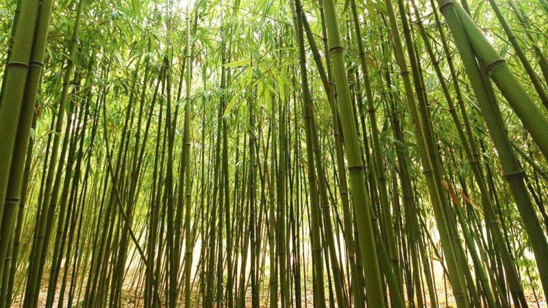 Bamboo India | Yogesh Shinde | Toothbrush