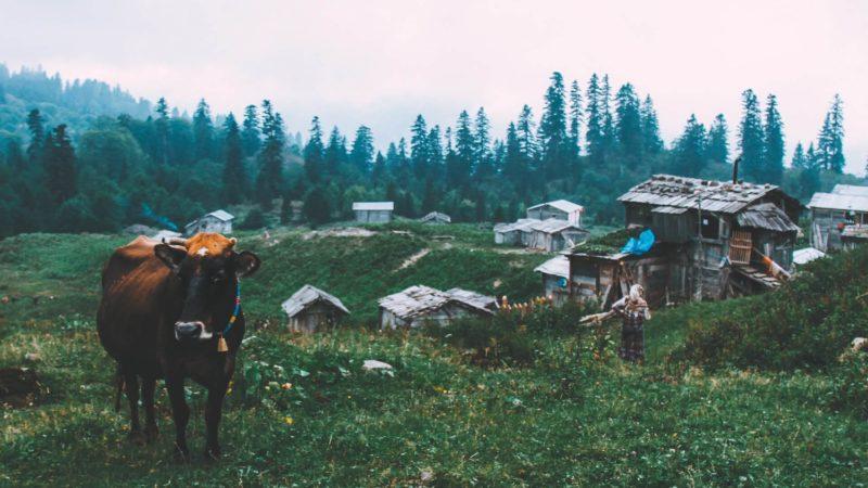 Five organic milk startups in India | Cow milk