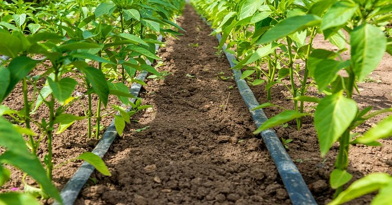 Drip Irrigation for home garden