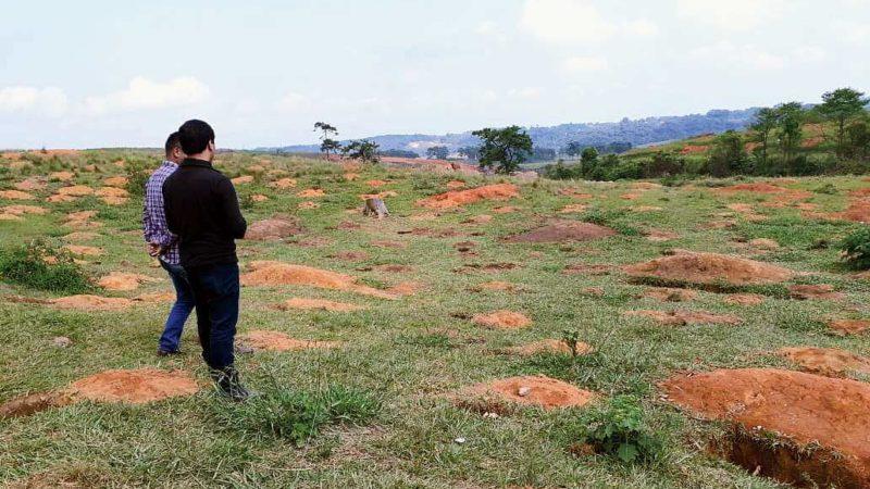 Meghalaya Tree Plantation