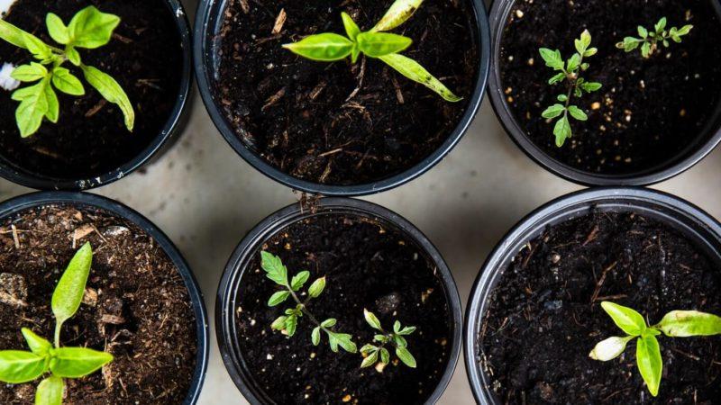 Organic Potting Soil Mix buy from amazon