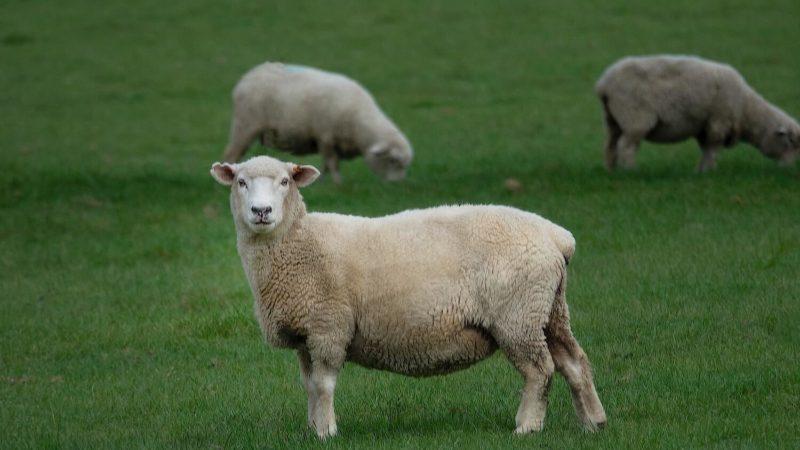 Faborg WEGANOOL - vegan wool