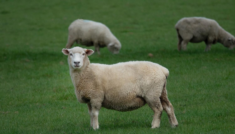 Faborg's Weganool – A Vegan Alternative for Animal wool fibre