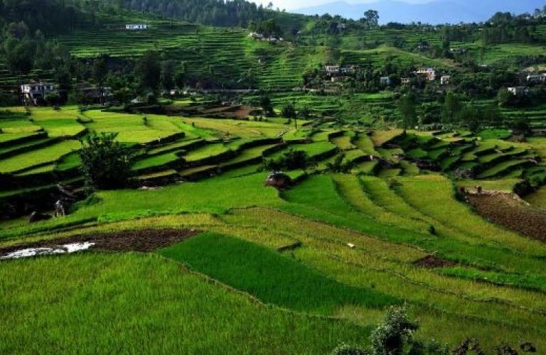 Uttarakhand government wants farmers to go organic