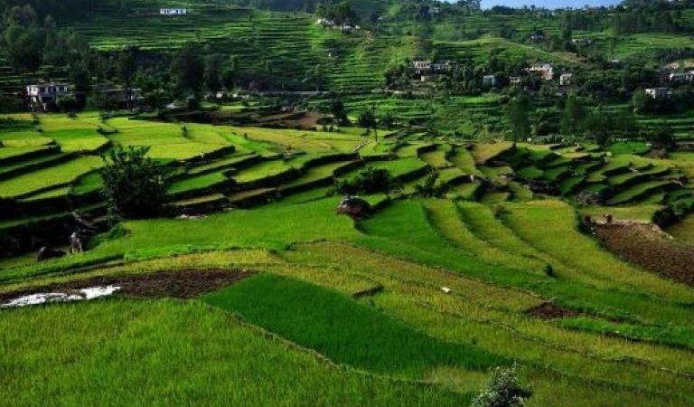 Uttarakhand government wants farmers to go organic