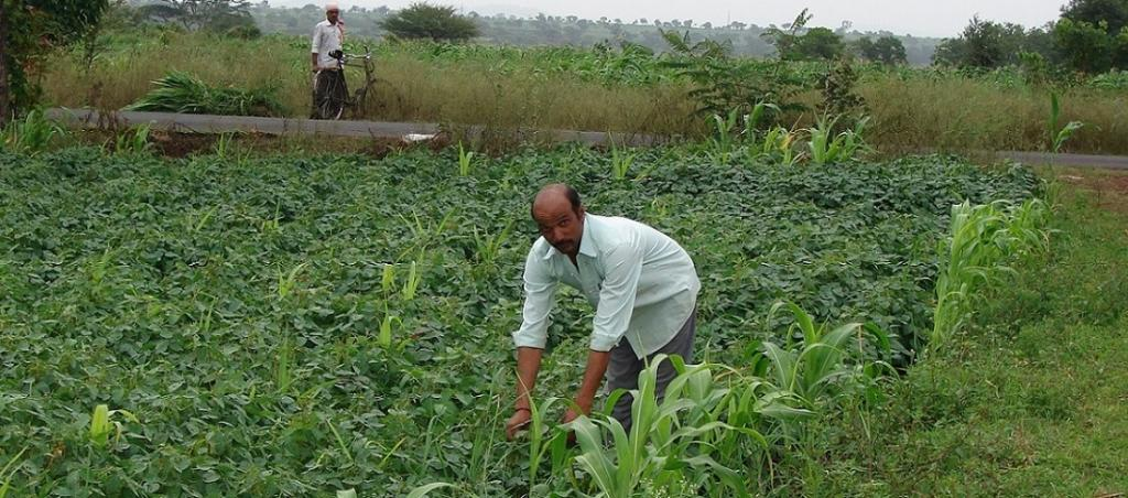 What is zero budget natural farming?