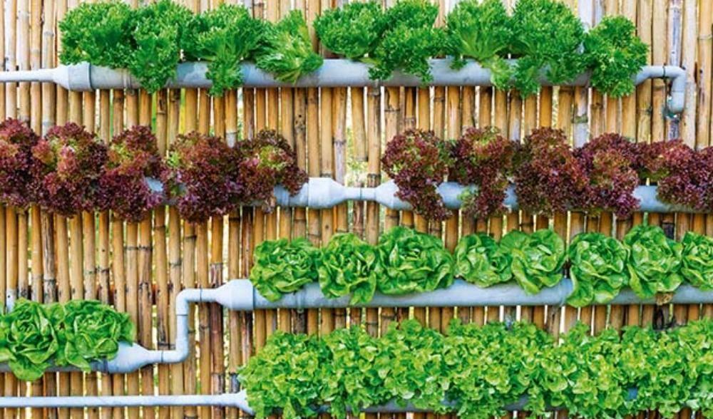 Soil less gardening